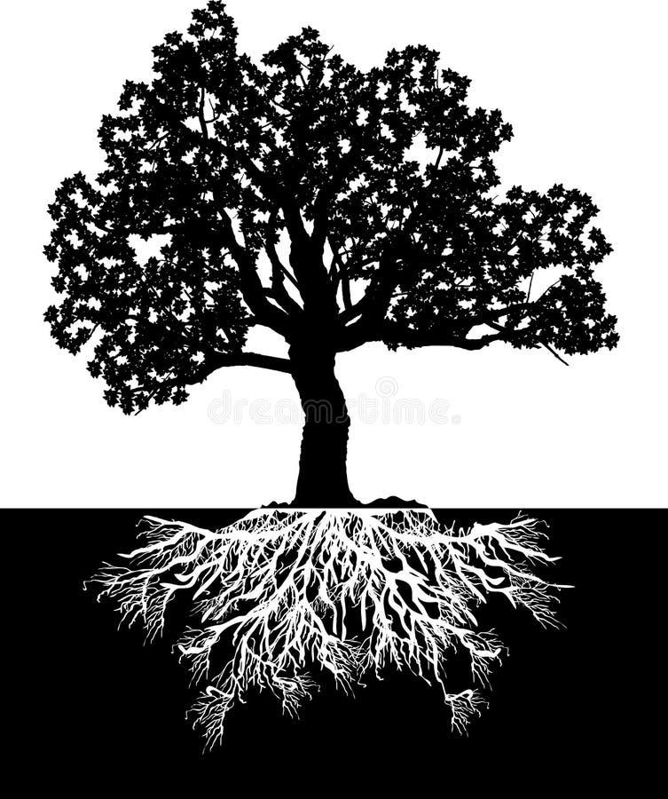 bw结构树 库存照片