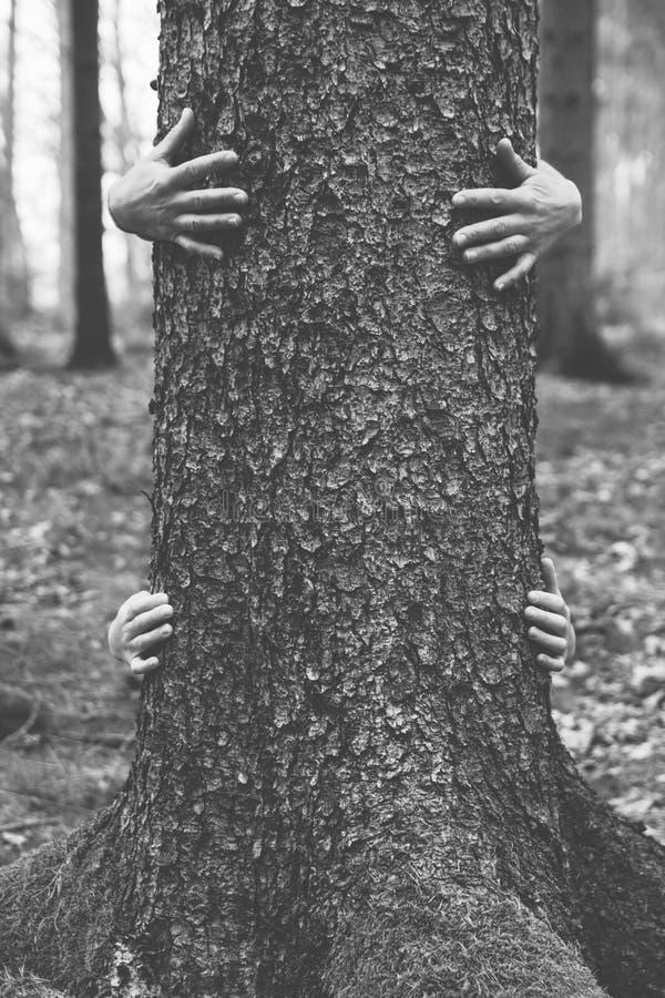 Bw руки отключения 2 дерева деревянный стоковое фото