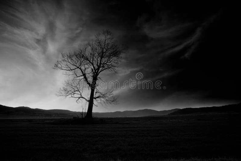Bw griezelige boom stock afbeeldingen