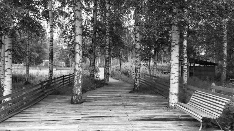 BW Nature Wallpaper. Black White Nature Wallpaper, Beautiful summer nature trail royalty free stock photos