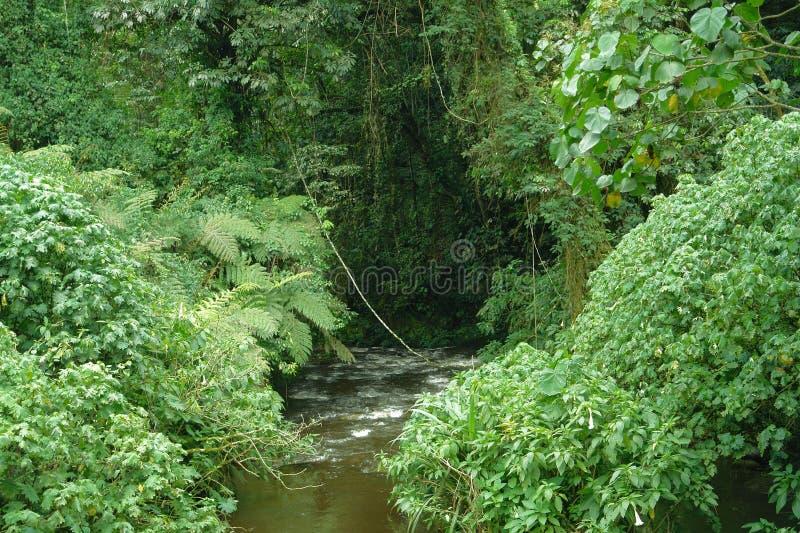 Bwindi ogenomtränglig skog i Uganda fotografering för bildbyråer