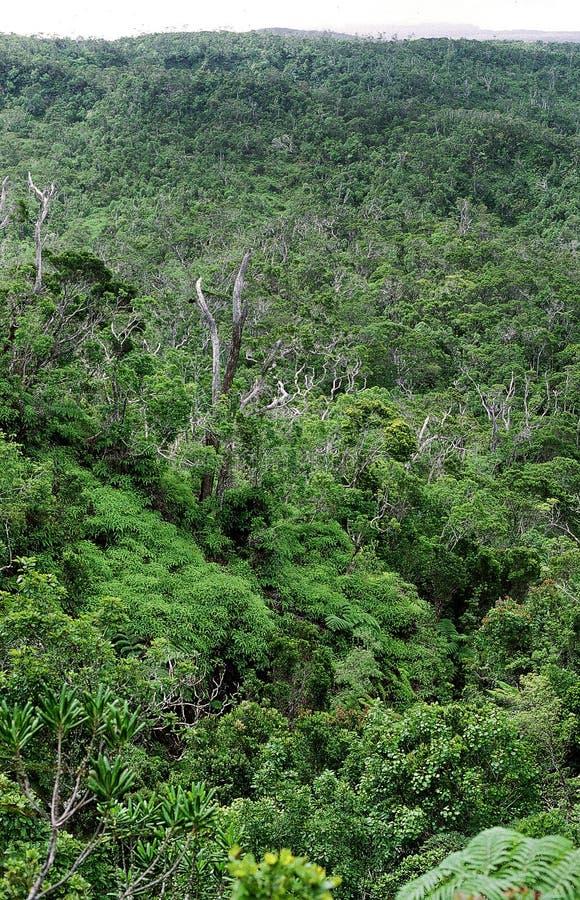 Bwindi Ondoordringbaar Forest Uganda stock fotografie