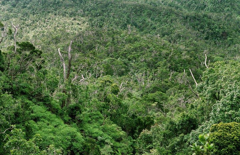 Bwindi Ondoordringbaar Forest Uganda stock afbeeldingen