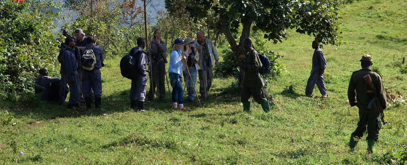 Bwindi Wald. lizenzfreie stockbilder