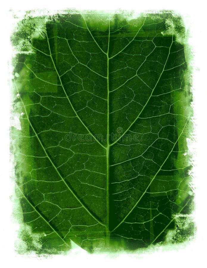 być obramowane tła grunge liści, ilustracji