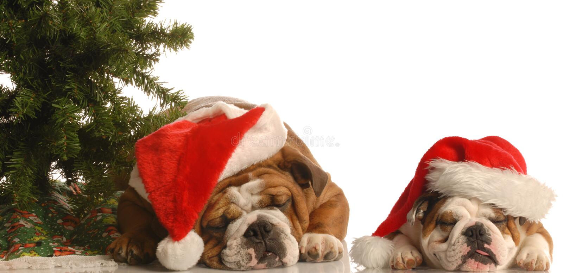 być prześladowanym Santa drzewa dwa fotografia stock