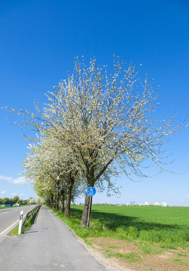 Download Bycicle Lane Under Blooming Tree Stock Photo - Image: 35068274