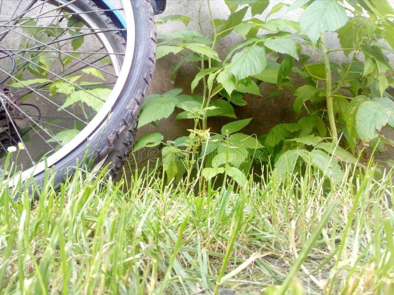 Bycicles стоковое фото rf