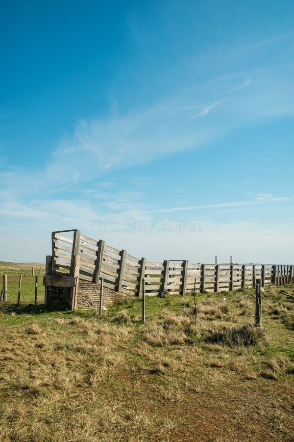 Bydła gospodarstwo rolne obraz stock