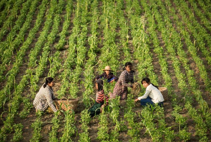 Bygd av Myanmar royaltyfria bilder