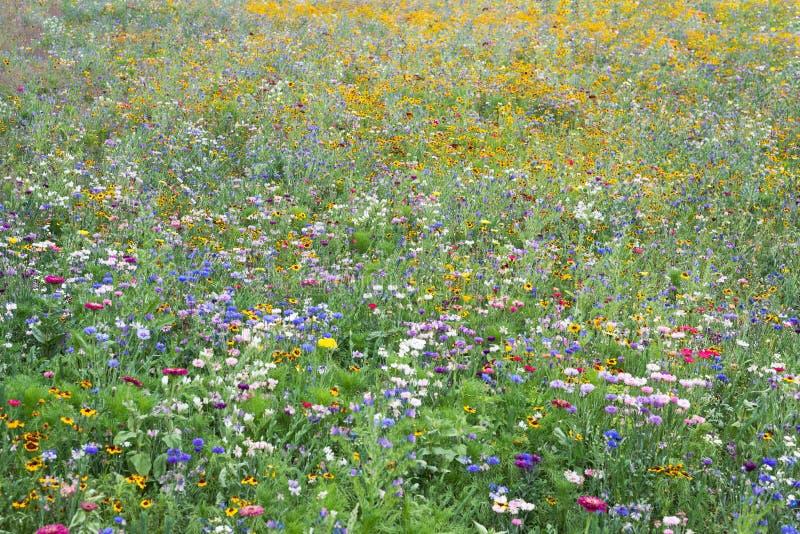 Bygd för blomningen för blommaängen parkerar lös blommande olika växter arkivfoton