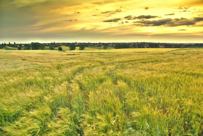 bygd fields rikligt royaltyfri fotografi