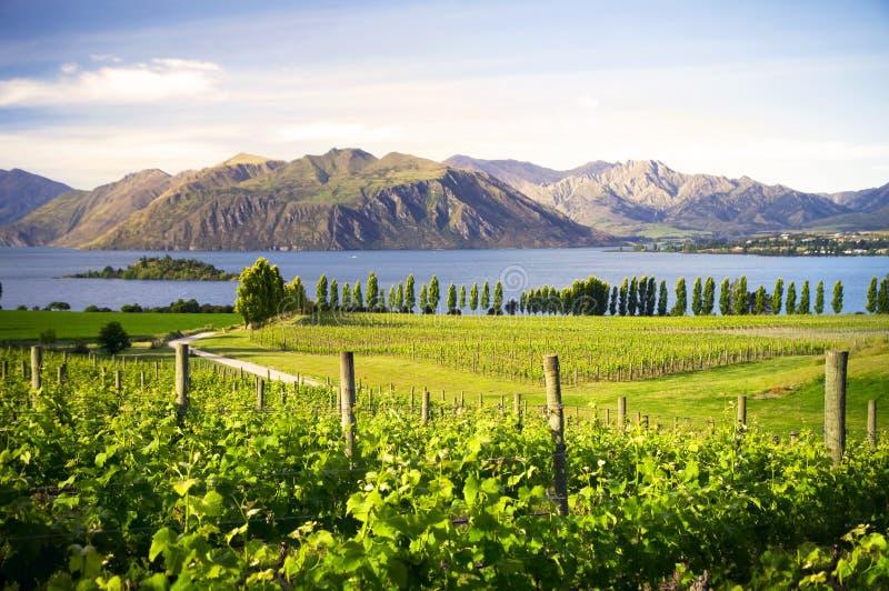 Bygd i Nya Zeeland royaltyfria foton