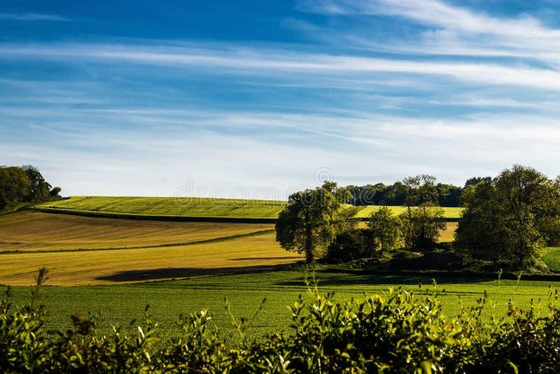 Bygd med fältet av växande korn arkivfoton