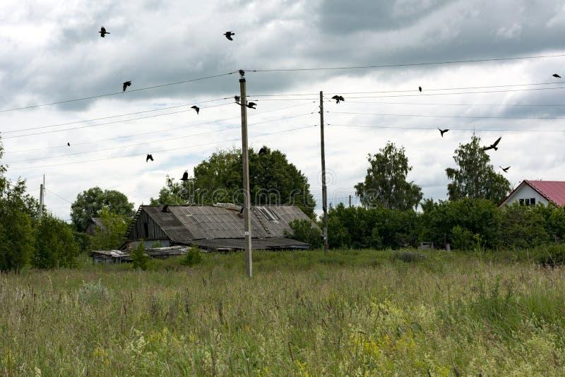 Bygd träd, fåglar, galanden över ängen, tak, pelare arkivbild
