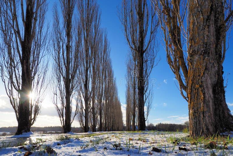 Bygdgränd på en fin vinterdag arkivfoton