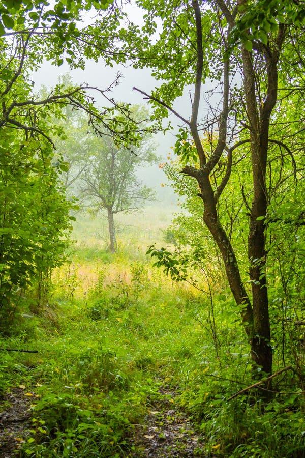 Bygdlandskap, grönt gräs, träd och mist royaltyfria bilder