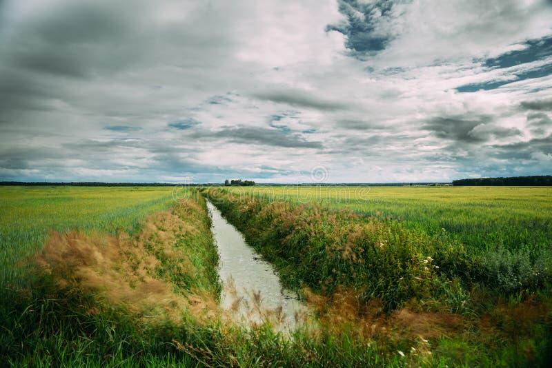 Bygdlandskap med det Ameliorative kanaldiket i grön jordbruks- fältäng arkivbild