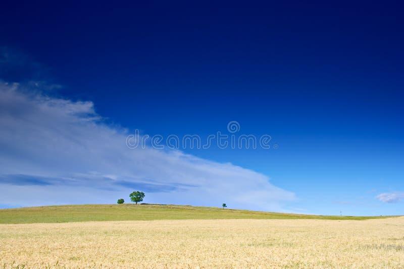 bygdmacedonia wheatfield royaltyfria bilder