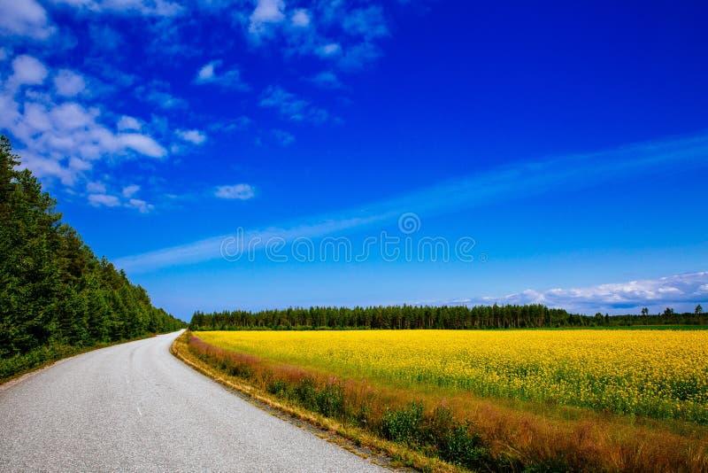 Bygdväg längs gult rapsfröblommafält och blå himmel i lantliga Finland royaltyfri fotografi