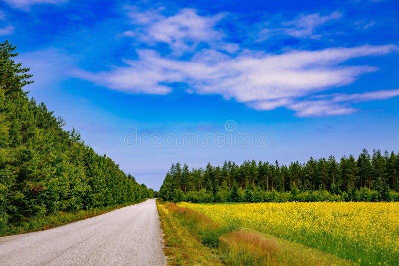 Bygdväg längs gult rapsfröblommafält och blå himmel i lantliga Finland arkivbild
