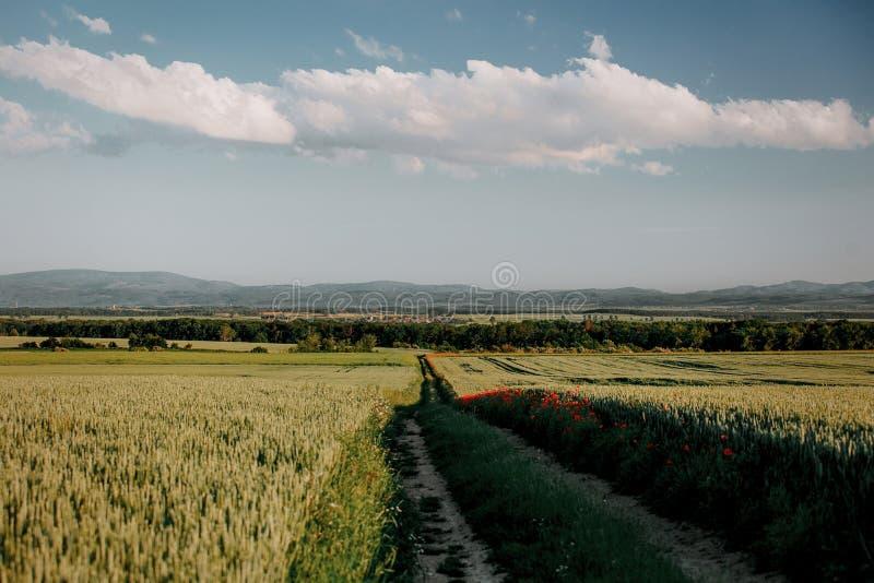 Bygdväg mellan vetefält i Silesia, Polen royaltyfri fotografi