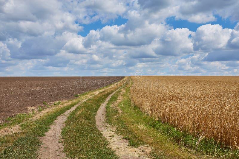 bygdväg till och med fält med vete arkivfoto