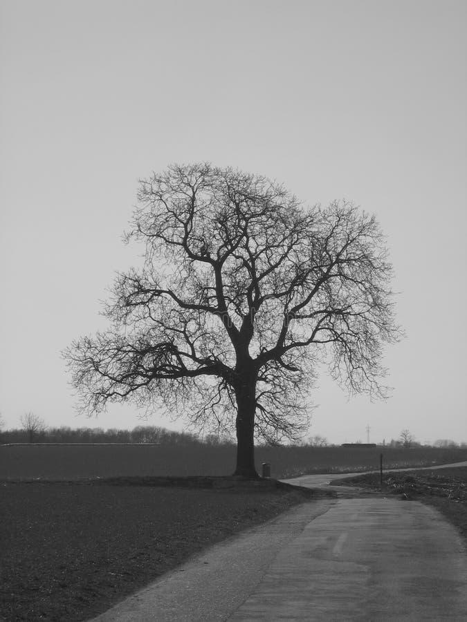 bygdvägtree arkivfoto