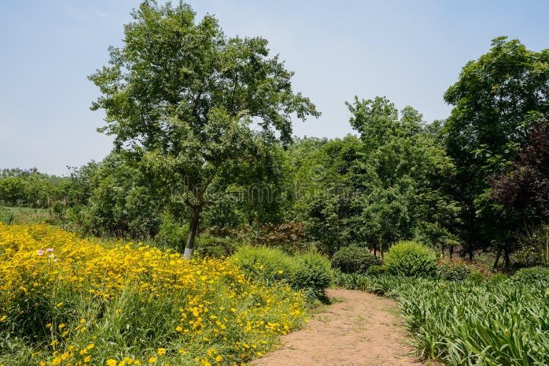Bygdvandringsled, i att blomma solig sommar royaltyfria foton