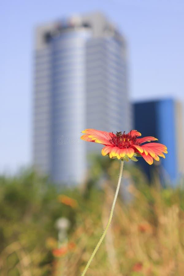 byggande blomma royaltyfri foto