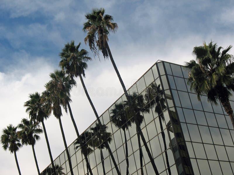 byggande moderna palmträd royaltyfria foton