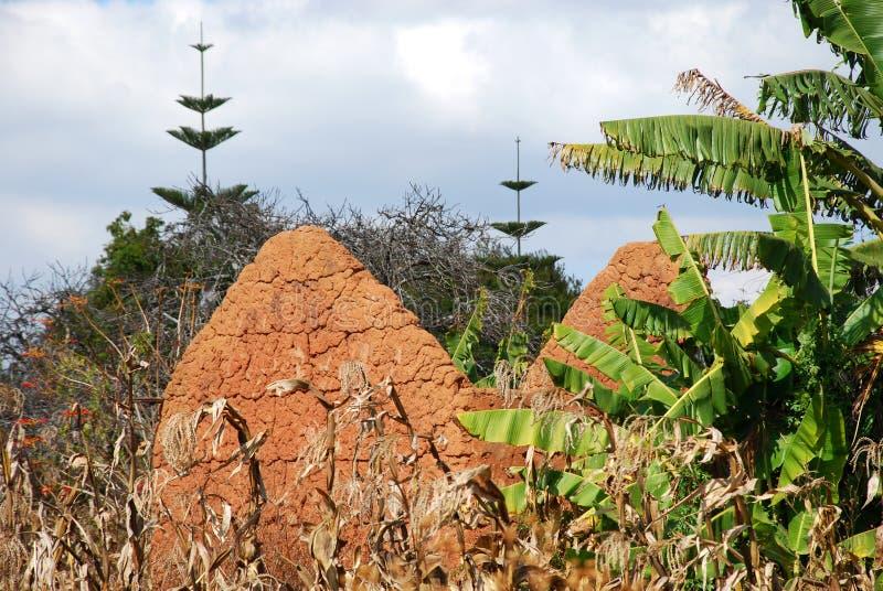 Byggandet av ett hus av lera och lera i Pomerini i Tanzania - Afrika fotografering för bildbyråer