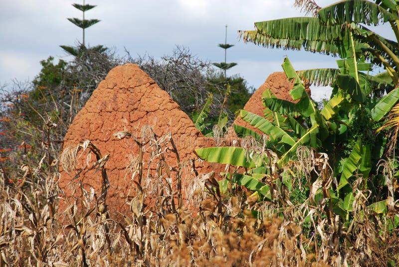 Byggandet av ett hus av lera och lera till Pomerini i Tanzania - Afrika royaltyfri bild