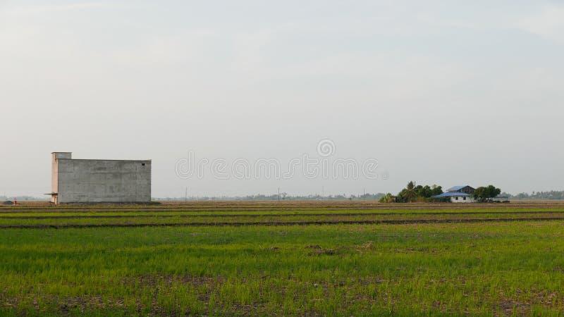 Byggnad av ätliga Swiftlet bird' s-reden som tilldrar fåglar för att komma och föda upp på mitt av risfältfältet Närliggande arkivbild