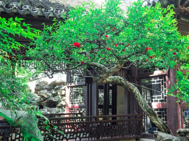 Byggnad för traditionell kines med det utsmyckade taket och röda fönster på Yu trädgårdar, Shanghai, Kina arkivbilder