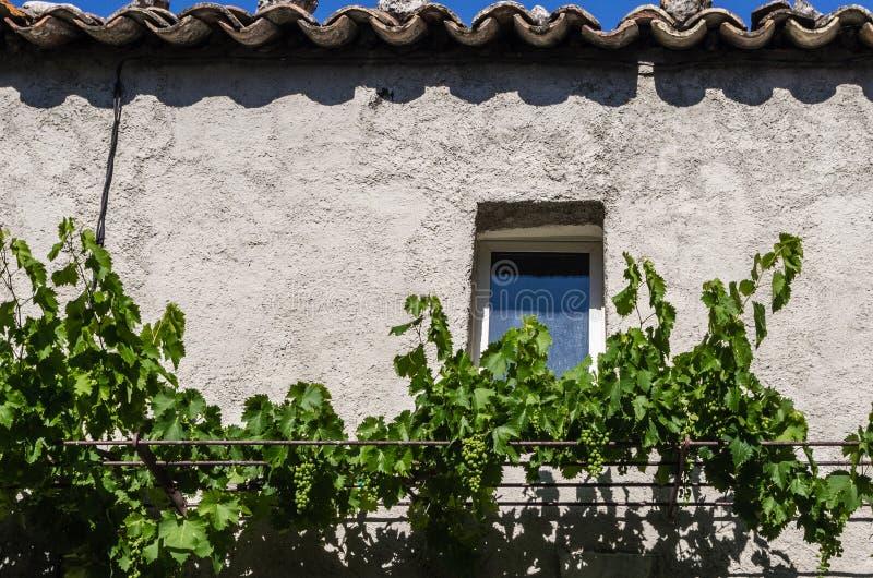 Byggnad med fönster- och druvavinrankor arkivfoto