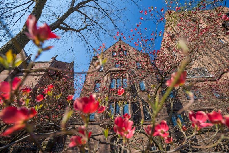 Byggnader för Yale universitet royaltyfri foto