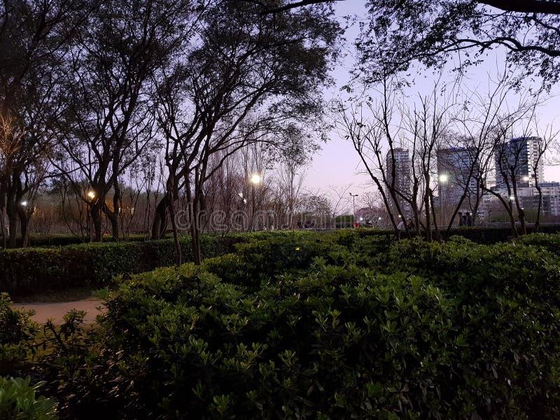 Byggnader och trees fotografering för bildbyråer