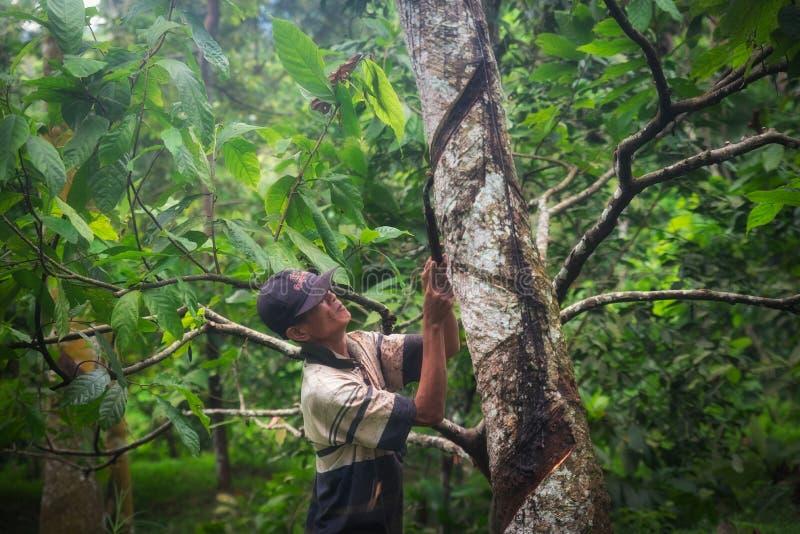 Byinvånare som arbetar med en kniv i Indonesien arkivfoton