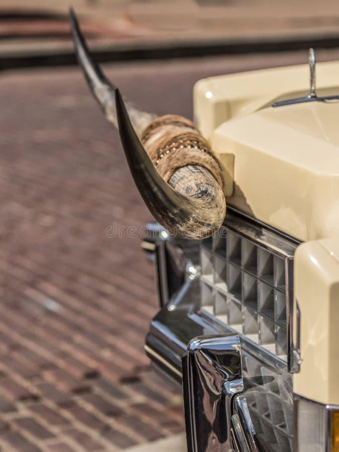 Byków rogi na samochodzie obrazy royalty free