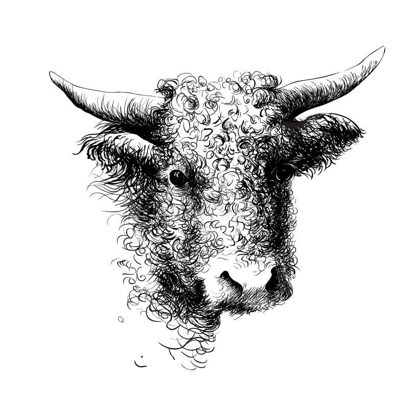 Byk, krowa, żubr, bizonu kierowniczy portret Cyfrowego atramentu rysunek royalty ilustracja