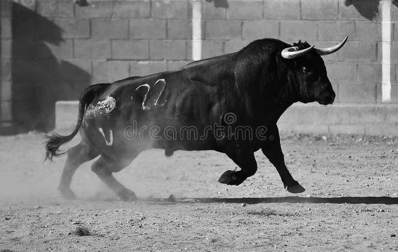 Byk w bullfighting pierścionku zdjęcia stock