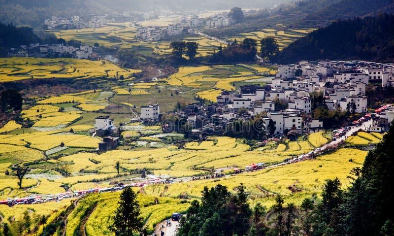 byn och våldtar blommor royaltyfri bild