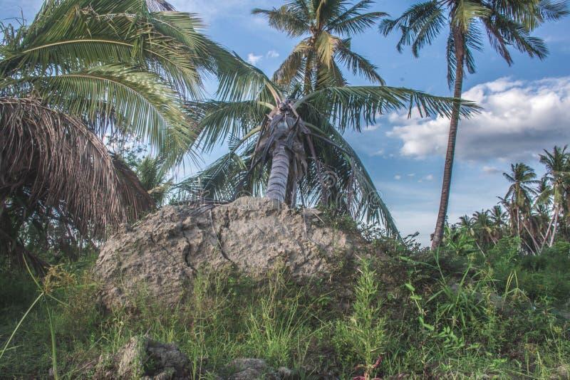 Byn Petobo förlorades till jorden arkivfoton