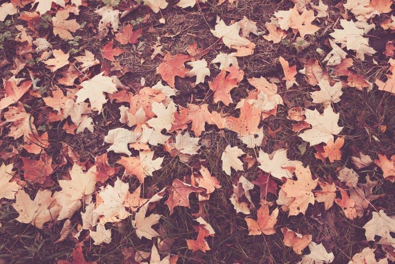 bystre liście jesienią fotografia royalty free