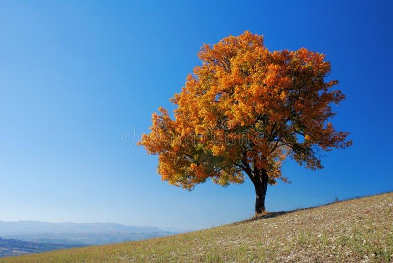 bystry upadku drzewo fotografia stock