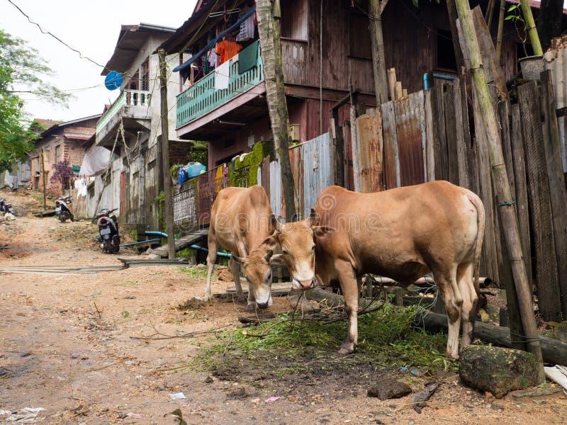 Byväg i Myeik, Myanmar royaltyfri fotografi