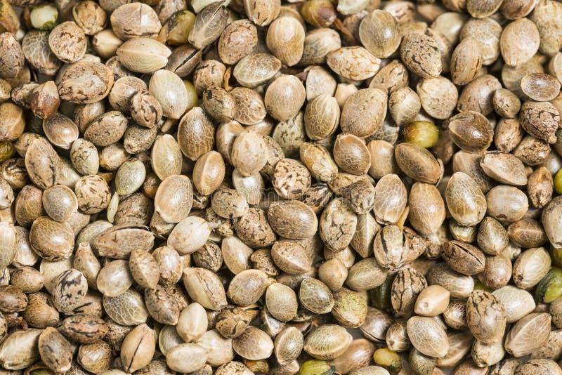 Cáñamo - semillas del cáñamo foto de archivo libre de regalías