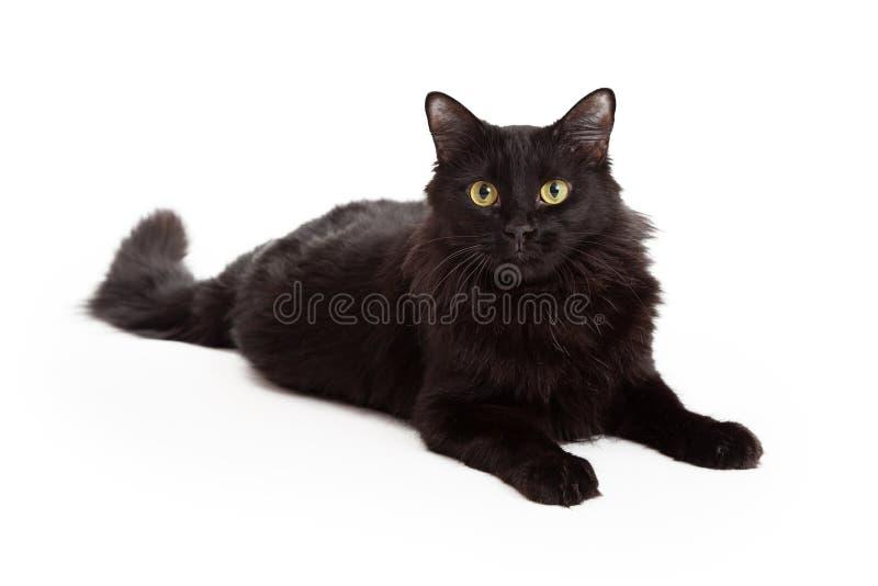 Cámara negra de pelo largo de Cat Laying Looking Into The fotos de archivo libres de regalías