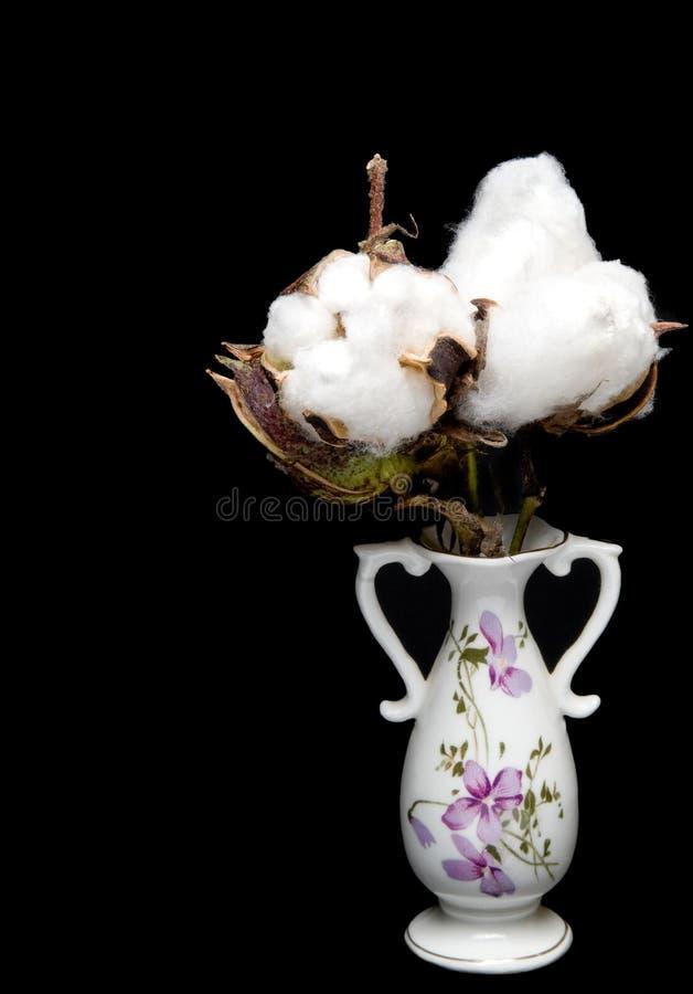 Cápsulas do algodão imagens de stock